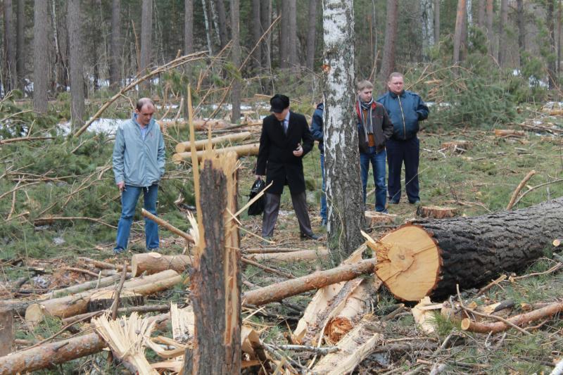 Томские активисты ОНФ подводят итоги работы в сфере экологии и защиты леса